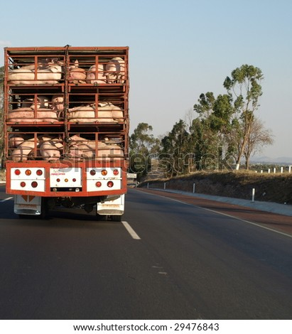 Big piggies on their way to market  north of Mexico City, Spring 2009.  The  distant sign says Mexico City.... see my other swine pic for a closer look.