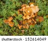 big pile of mushrooms - stock photo