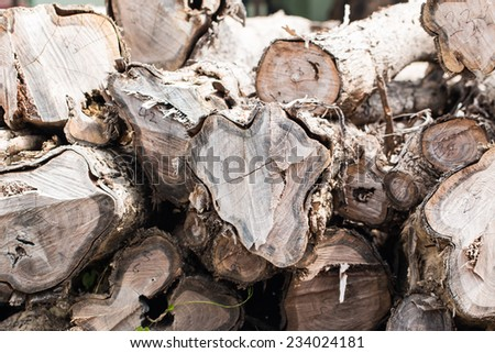 big pile of wood in a forest - stock photo