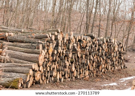 Big pile of wood in the forest - stock photo