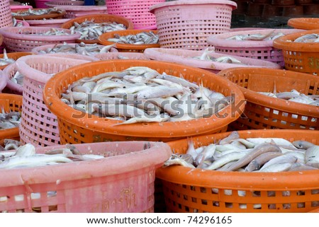 Big pile sea fish in  basket on a fish market . - stock photo