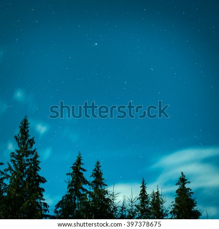 Big pine trees under blue night sky with many stars - stock photo