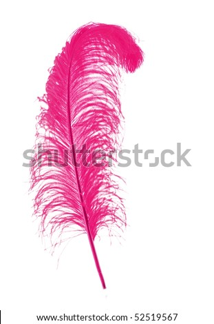 Big pink feather on white background - stock photo