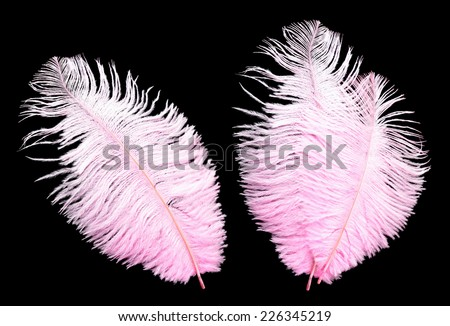 Big pink feathers on black background. - stock photo