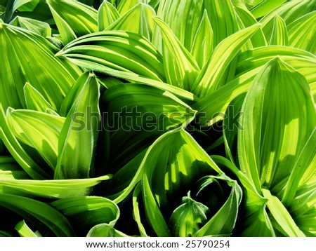 Big plant leaves embedded by sunshine - stock photo