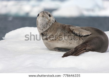 Big predator of Antarctica