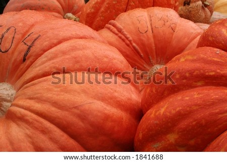 big pumpkin contest - stock photo