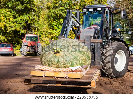 Big pumpkin with a tractor