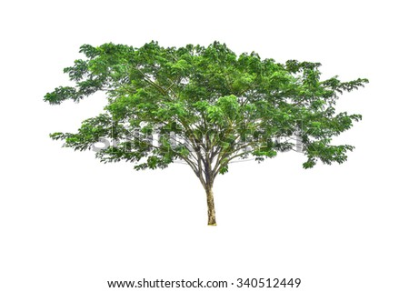 Big Rain tree on isolated  - stock photo
