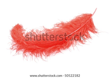Big red feather on white background