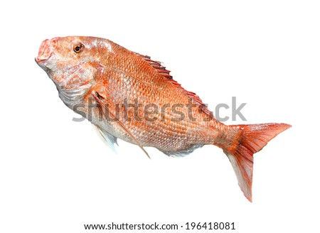 big Red Snapper fish isolate on white - stock photo