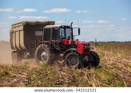 Big red tractor rides through the field with a trailer loaded with sunflower seeds, on a bright, sunny day. Autumn harvest.