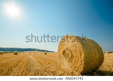 big roll harvested straw on the mown field with great perspective and other roles, background consists of pure blue sky and sun in the frame
