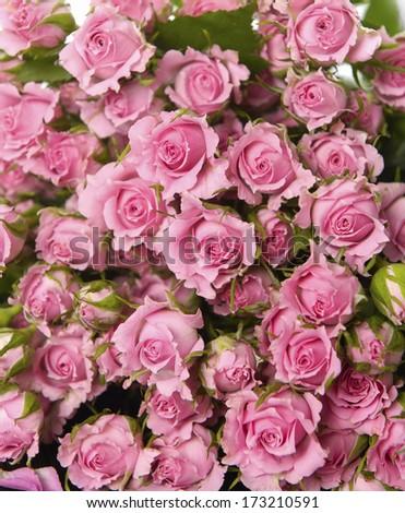 Big Roses twxture - stock photo