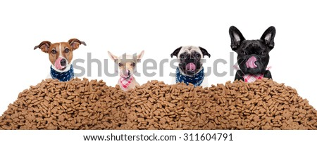 big row or group of hungry dogs behind a big mound of food , ready to eat lunch , isolated on white background - stock photo