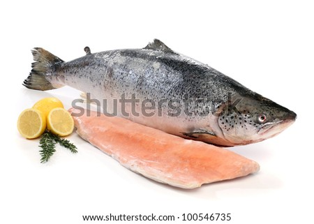 Big salmon fish and a fillet isolated on white - stock photo