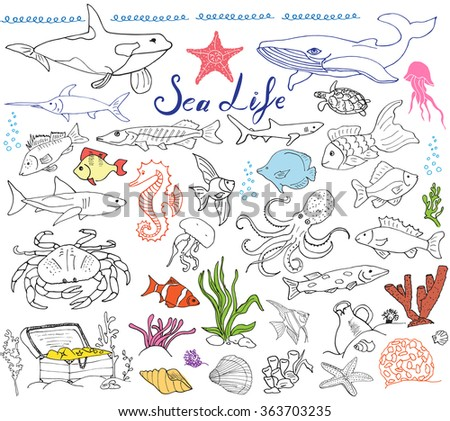 Big sea life animals hand drawn sketch set. doodles of fish, shark, octopus, star, crab, whale, turtle, seahorse, seashells and lettering, isolated
