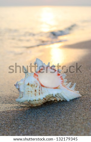 big seashell background on the sandy beach against waves and sunset - stock photo