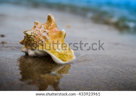 Big seashell on sand of the beach in sunlight, background, close up - stock photo