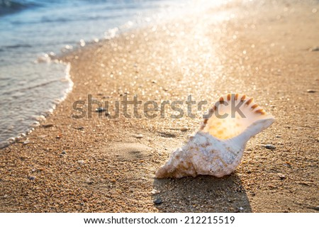 Big seashell on the sand on the beach in the back-light of sunset, background, close up - stock photo