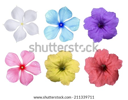 Big Selection of Various Flowers Isolated on White Background. Red, Pink, Yellow, blue,  Colors - stock photo