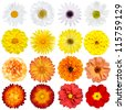 Big Selection of Various Flowers Isolated on White Background. Red, Pink, Yellow, White Colors including rose, dahlia, marigold, zinnia, strawflower, sunflower, daisy, primrose and other wildflowers - stock photo