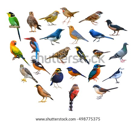 big set of birds from Thailand.