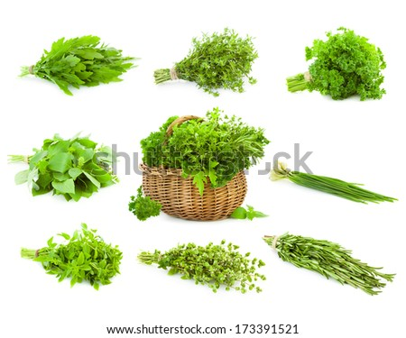 Big Set of Bunches and Basket  of fresh Spice Herbs /  Basil, Chive, Majoram, Oregano, Parsley, Thyme, Rucola and Rosemary /  isolated on white background - stock photo