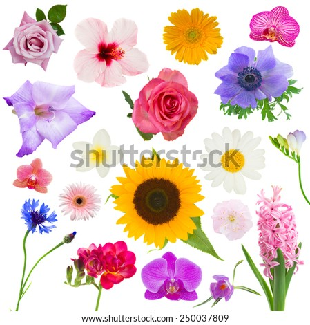 Big set of various flowers Isolated on  on white background