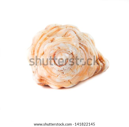 big shell isolated over white