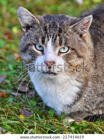 big sick tabby cat muzzle