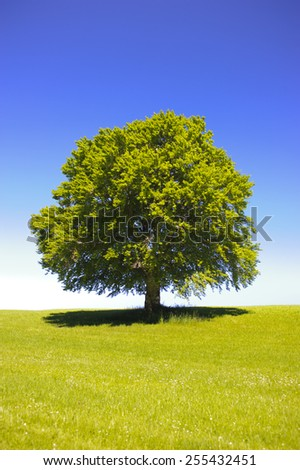 big single beech tree at spring in meadow - stock photo