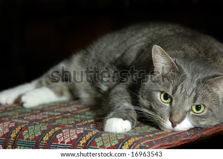Big smart cat taking a rest in dark. Shallow dof, right part is in focus, left part blurred for using as a copy space - stock photo