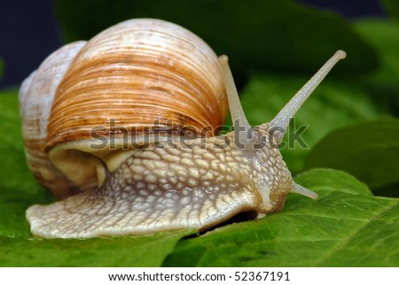 Big snail - stock photo