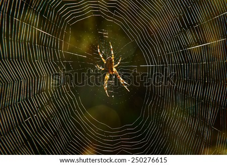 big spider in the woods waiting for the network to victim - stock photo