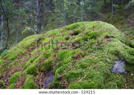 Big stone cowered with moss