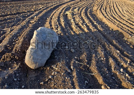 big stone on freshly cultivated farm field soil - stock photo