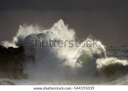 Big stormy wave splash at sunset. Dangerous cliffs from portuguese northern coast. Soft backlight.