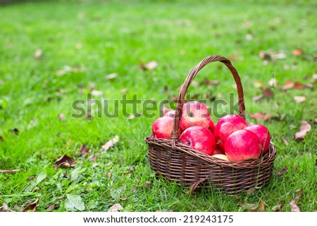 Big straw basket with red apples on green grass - stock photo