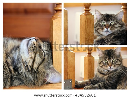 big striped cat or kitten indoors. photo - stock photo