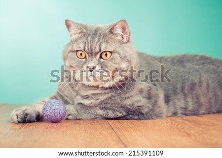 Big tabby cat playing with rubber ball toy front mint green background - stock photo