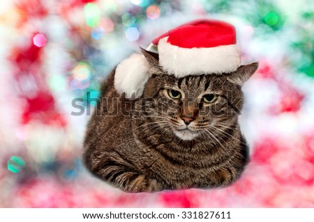 Big tabby cat wearing a santa hat on christmas background