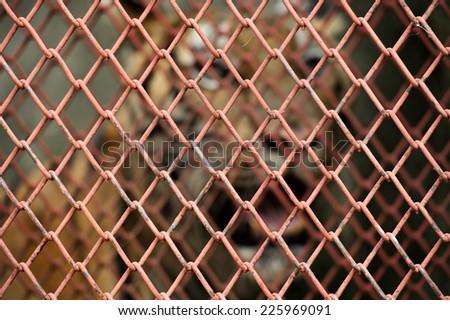 Big tiger in jail - stock photo