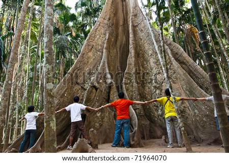 Big tree - stock photo