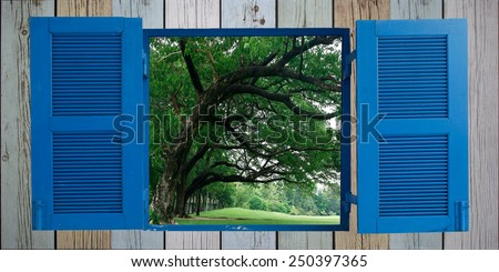 big tree and old wood window - stock photo