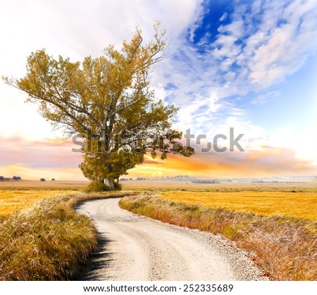 Big tree and road landscape.Sunset Dream scape in orange toned. - stock photo