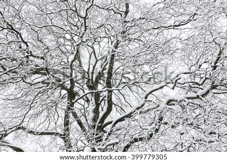 Big tree cloudy sky black and white background - stock photo