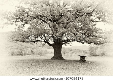 Big tree. Composition of nature. - stock photo