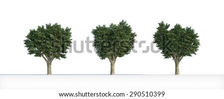 BIG tree 3D isolated - stock photo