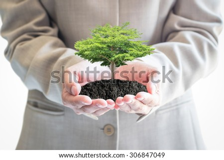Big tree growing on businessman hands: Investing in sustainable/ eco friendly business development concept: Environment conservation, reforestation, sustainable forest and plantation campaign idea - stock photo